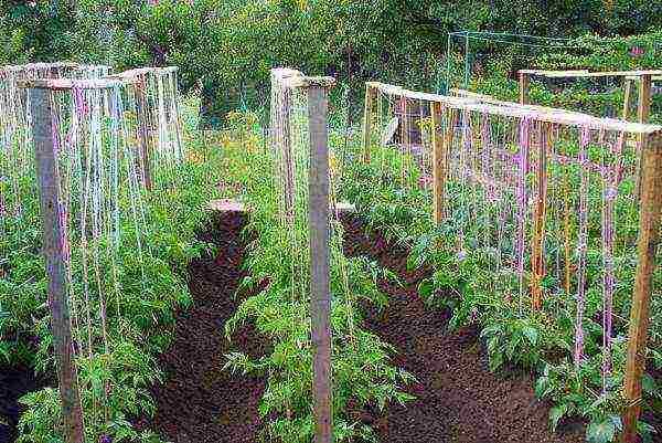 Высадка рассады помидор в открытый грунт: когда и как правильно сажать томаты