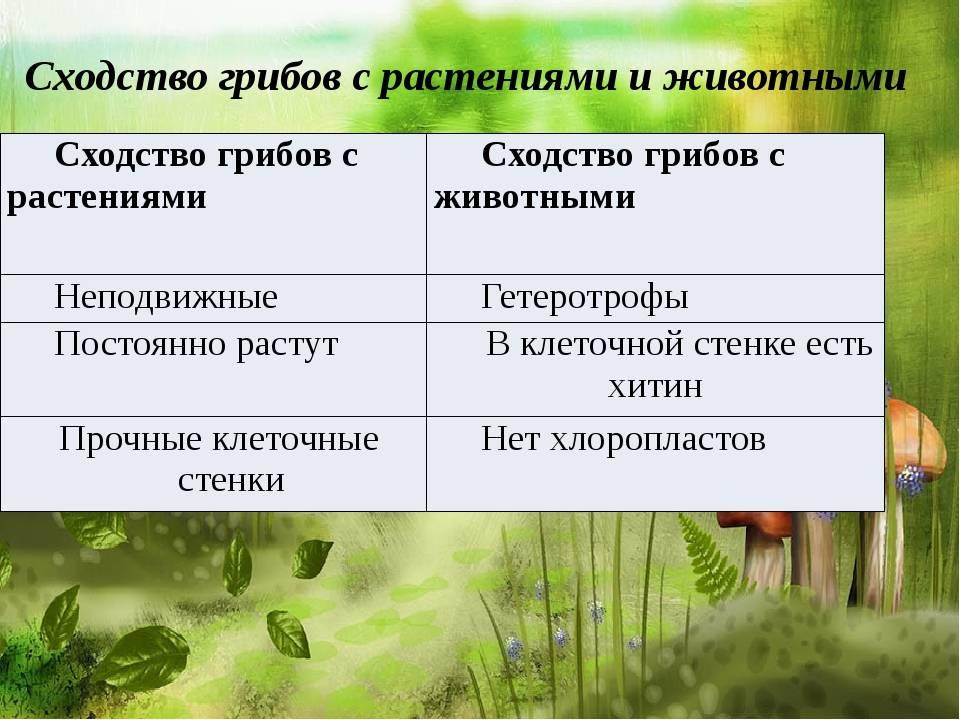 Сходство грибов с растениями: общие признаки, чем отличаются