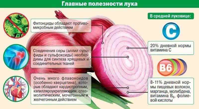 Как вырастить ялтинский лук из семян