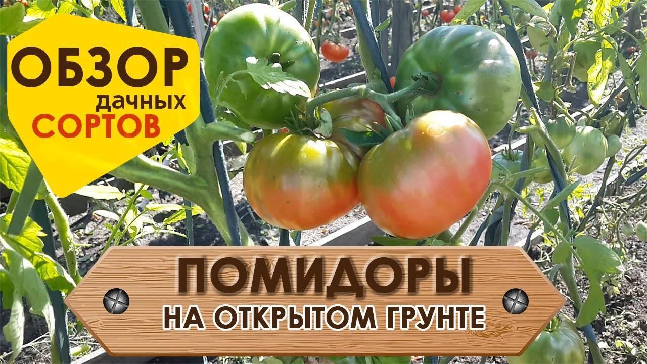 Лучшие сорта томатов на 2021 год для теплиц в подмосковье: особенности выращивания, наименования, описание сорта и отзывы