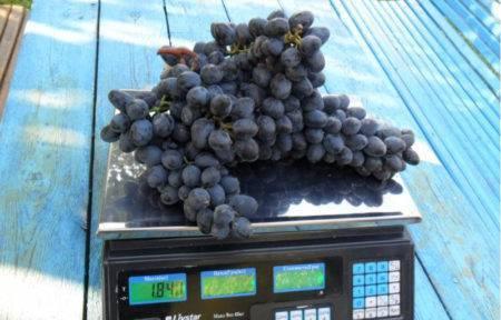 Виноград чарли: все секреты необычного сорта + отзывы дачников