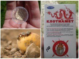 10 народных средств от колорадского жука на картошке