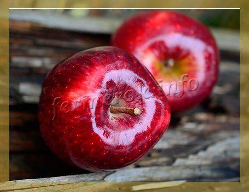 Обзор лучших сортов зимних яблонь