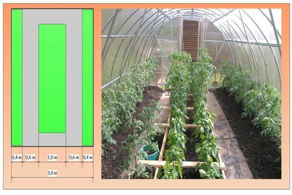 Выращивание помидоров в теплице из поликарбоната — пошаговая инструкция