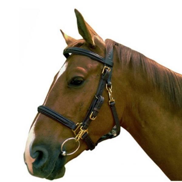 Уздечка для лошади: трензельная и бестрензельная, строение, фото