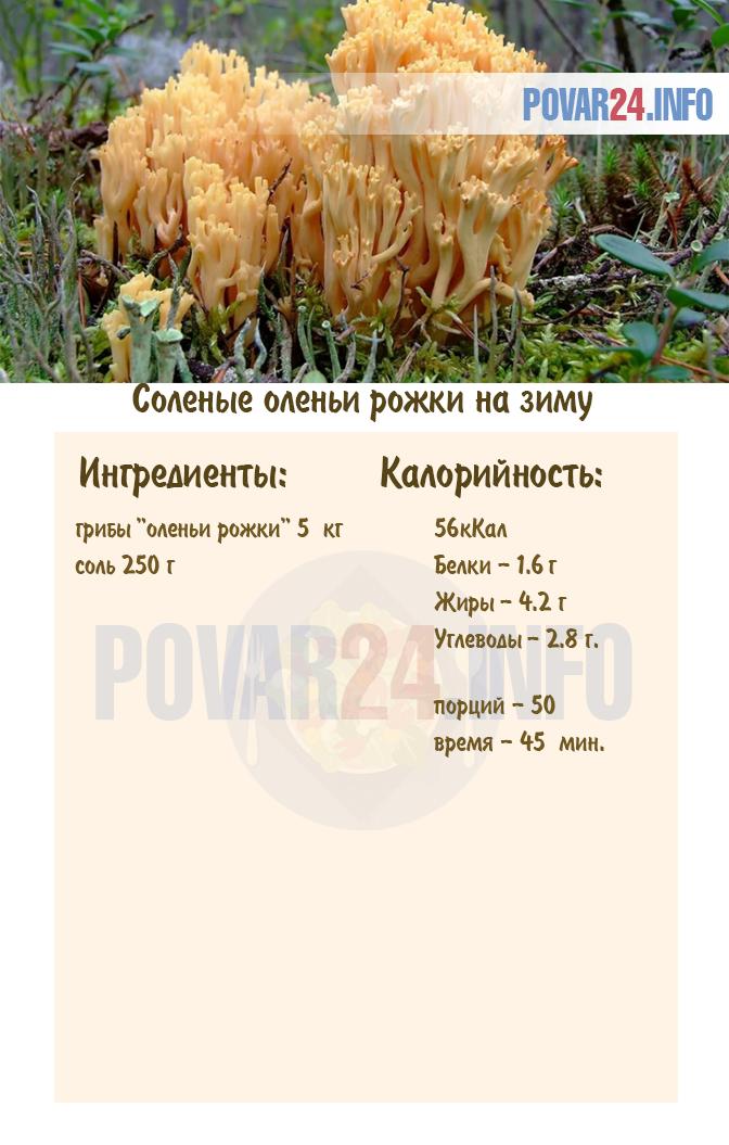 Оленьи рожки – как приготовить грибы в домашних условиях на зиму