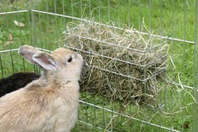 Рацион кроликов в сутки
