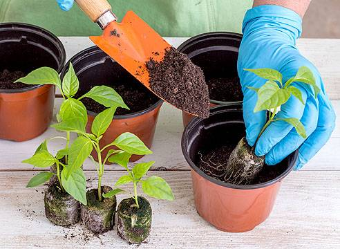 Посадка томатов в торфяные таблетки - сажаем и выращиваем рассаду
