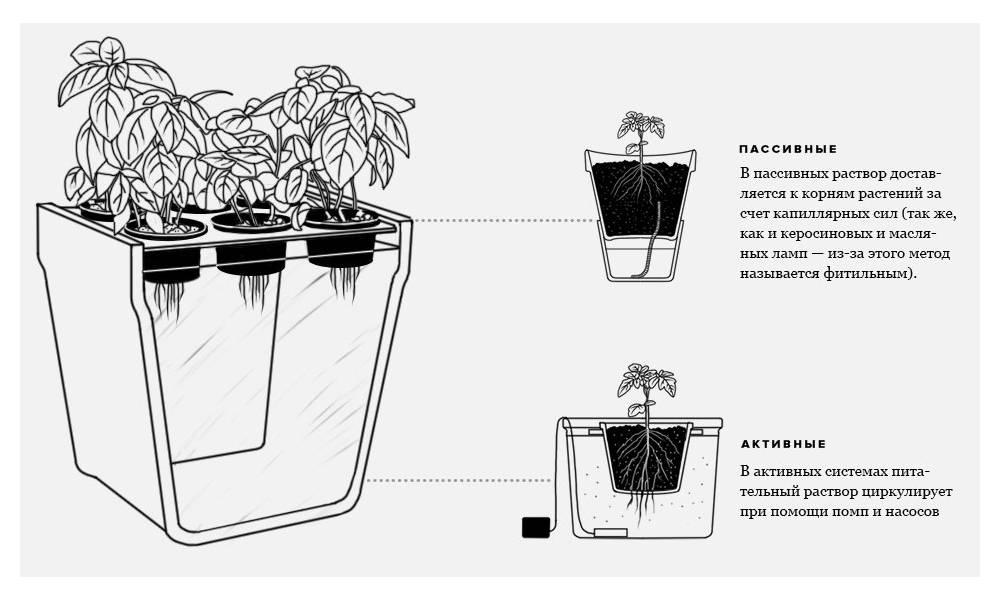 Пасынкование перцев в теплице: схема