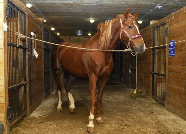 Выбор клички для лошади