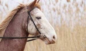 Какие болезни лошадей существуют