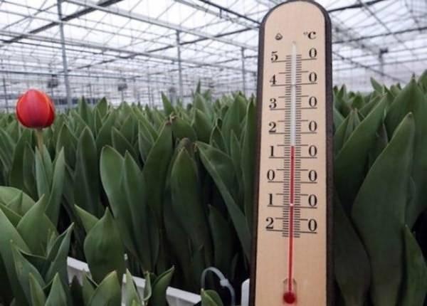 ✅ о минимальной температуре для рассады томатов: какую выдержит рассада помидор - tehnomir32.ru