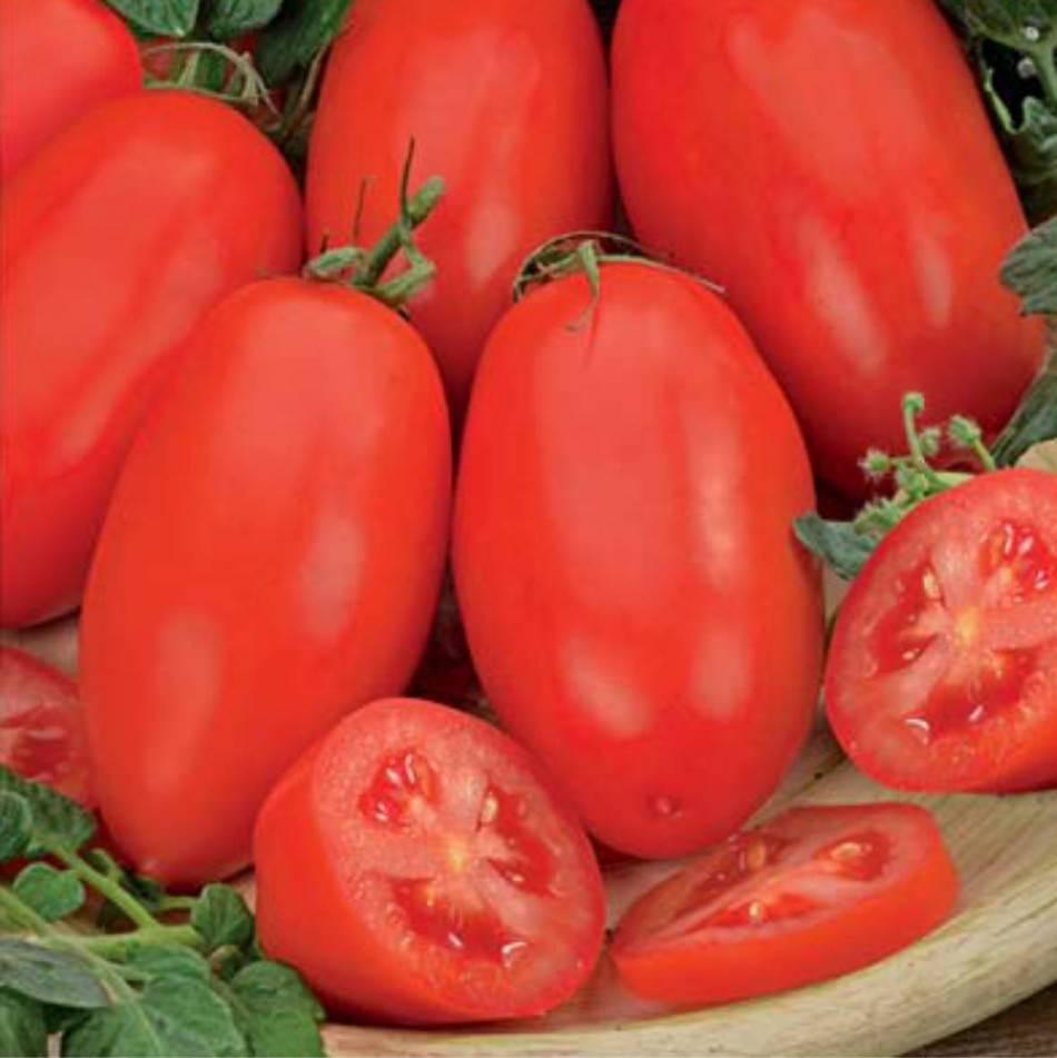 Томат челнок: характеристика и описание сорта, отзывы, фото, урожайность