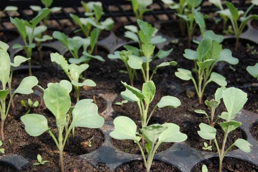 Планировка огорода: схема правильной посадки овощей, фото и видео