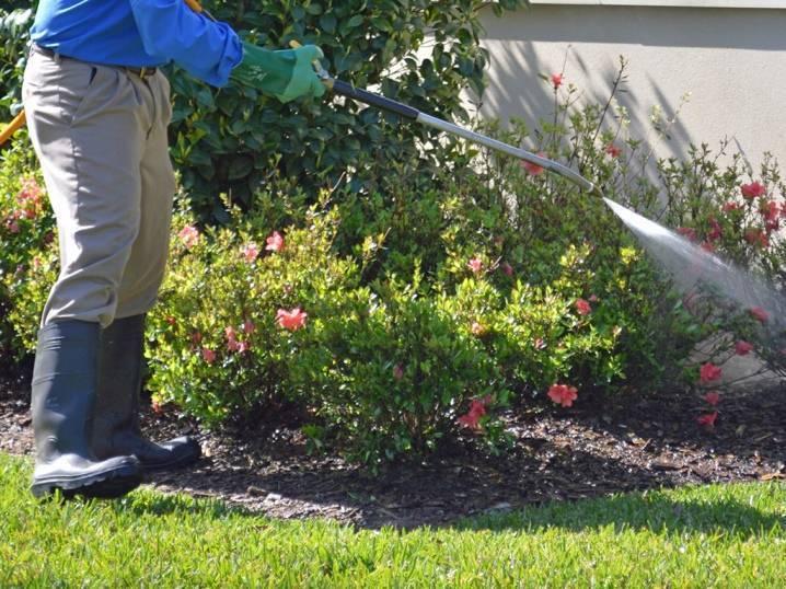 Железный купорос: применение в садоводстве, инструкция для обработки деревьев