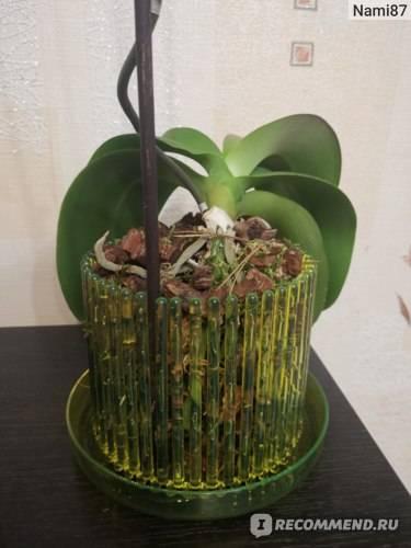 Тропики в городской квартире, или что такое посадка орхидеи своими руками на блок?