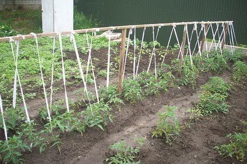 Как подвязывать помидоры в открытом грунте: зачем нужна процедура, материалы, различные способы