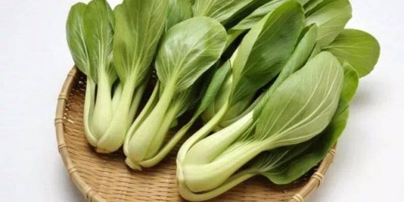 Капуста пак-чой (бахчой или бок-чой): когда сажать семенами и нюансы выращивания китайского овоща, а также уход, сбор урожая и борьба с вредителями и болезнями