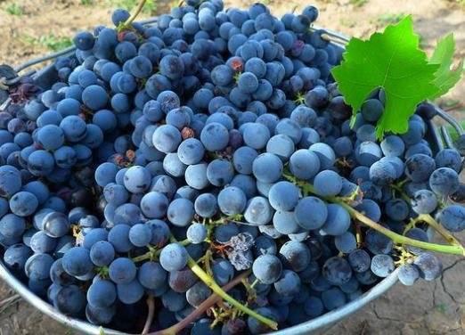 Какой виноград калорийнее: черный или белый