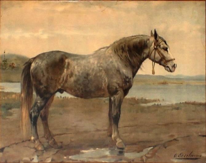 Русский тяжеловоз. описание породы лошадей с фото и видео