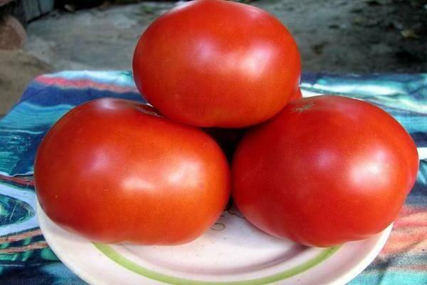 Как вырастить томат красным красно
