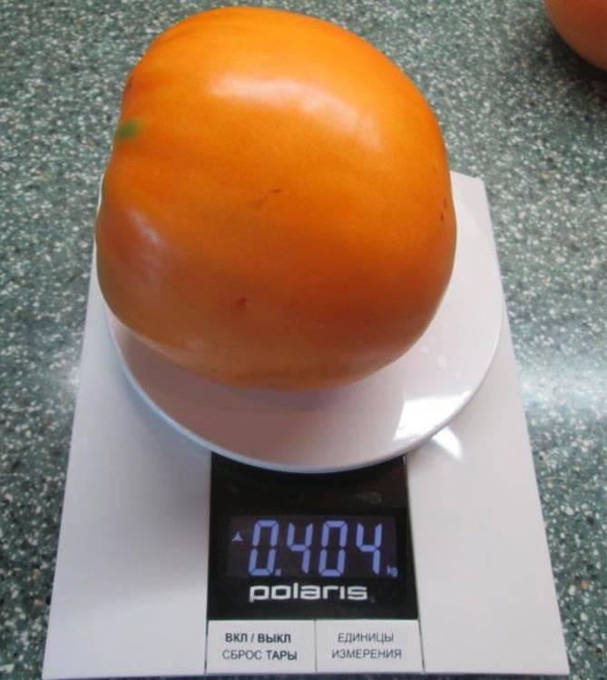 Сочный, сладкий томат «медовый спас» с насыщенным вкусом и ярким цветом — солнечное украшение вашей грядки