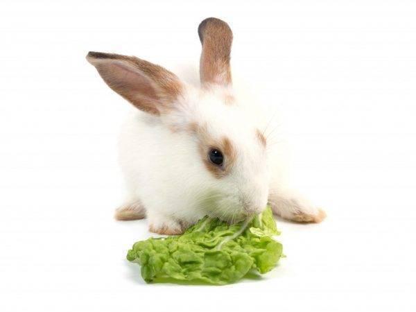 Можно ли давать кроликам декоративную капусту