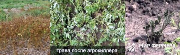 «агрокиллер» от сорняков — как избавиться от ненужной травы навсегда