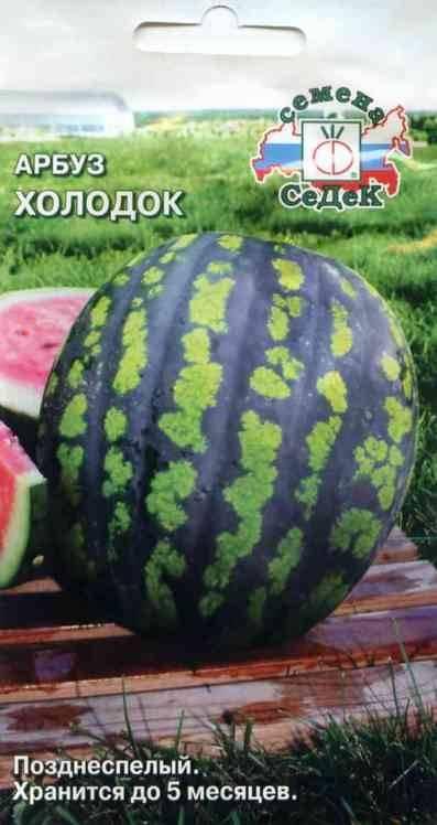Арбуз холодок: описание, выращивание, фото