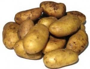 Сорт картофеля уладар: описание, посадка и уход русский фермер
