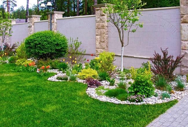 Какие растения можно высадить на даче вдоль забора