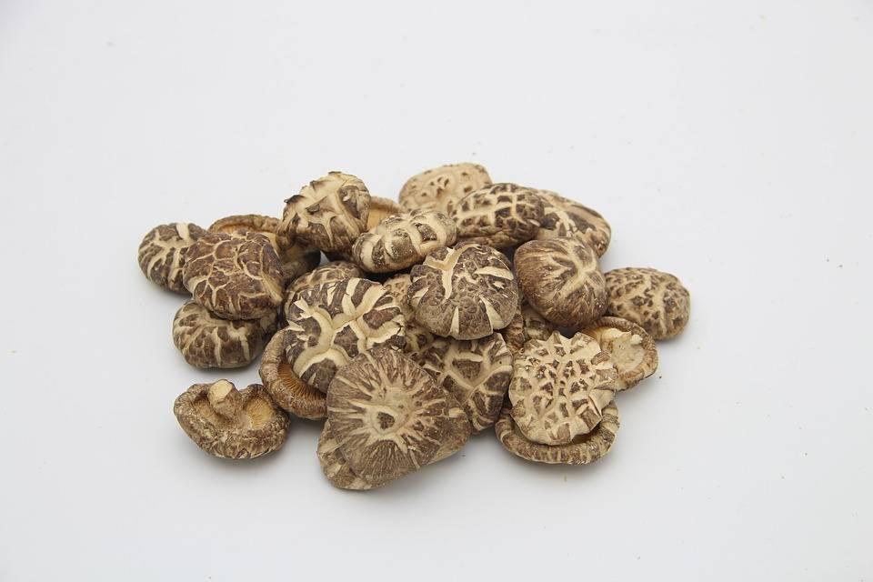 Способы выращивания грибов шиитаке