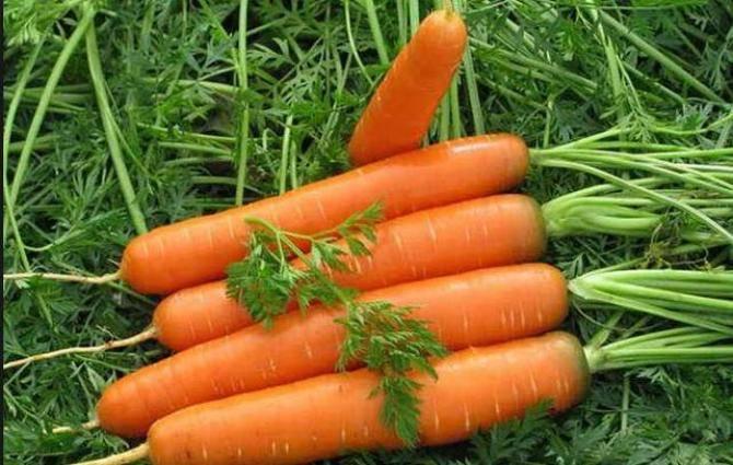 Морковь и керосин для прополки: можно ли провести обработку сорняков с помощью этой жидкости, как правильно развести для полива и опрыскать траву, в какой пропорции? русский фермер