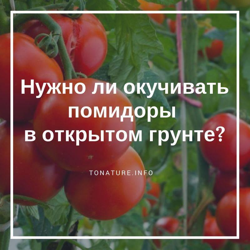 Нужно ли окучивать помидоры - советы по обработке в открытом грунте и теплицах (105 фото)