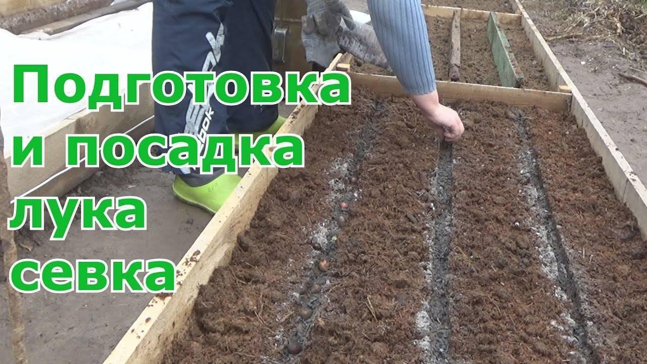 Как получить ранний урожай лука-севка: посадка весной или осенью, что лучше?, как садить
