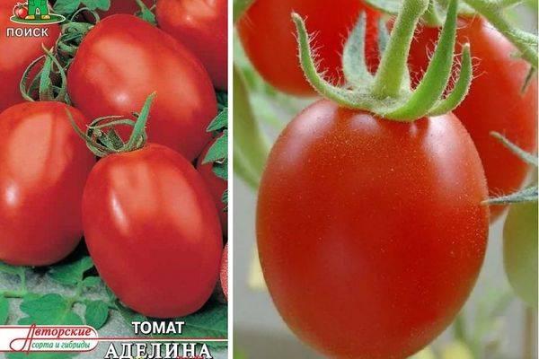 Томат аделина: характеристика и описание сорта с фото