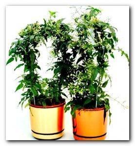 Озеленяемся: 15 самых больших комнатных растений
