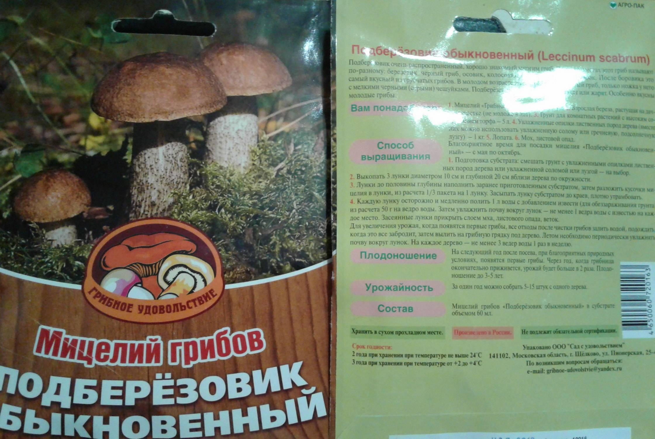 Особенности культивирования лесных грибов на дачном участке