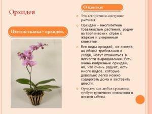 Орхидеи: родина орхидеи и виды