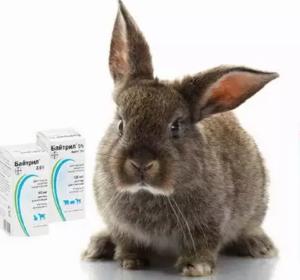 Ветеринарный препарат | ампролиум 30% от вик