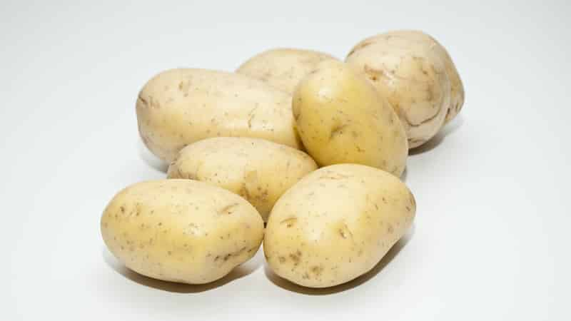 Надежный и любимый фермерами сорт картофеля «альвара» от немецких селекционеров