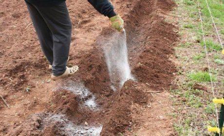 Удобрения для картофеля при посадке в лунку: что лучше вносить, как подкармливать весной и летом во время цветения
