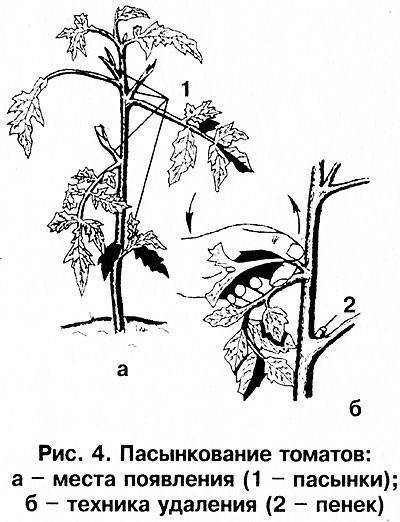 Пасынкование помидоров в теплице и открытом грунте: правила, схемы, сроки