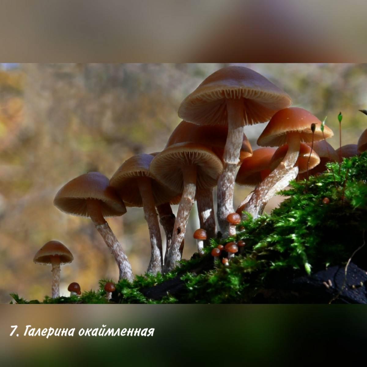 Какие грибы можно собирать в Забайкальском крае