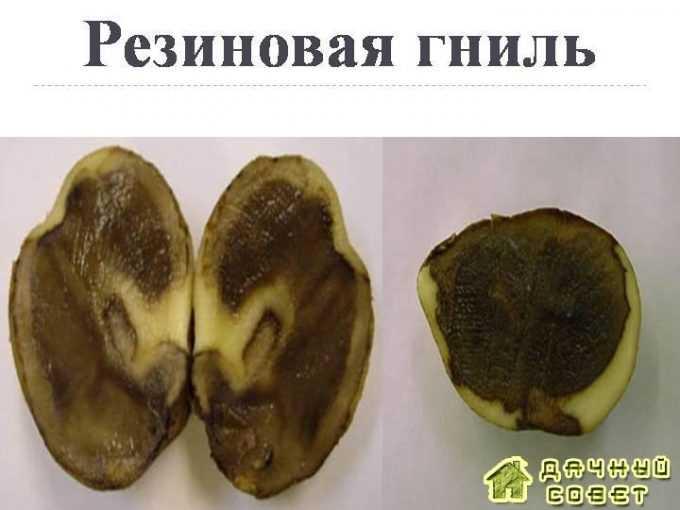 Болезни картофеля: осматриваем клубни, определяем проблему и лечим на supersadovnik.ru
