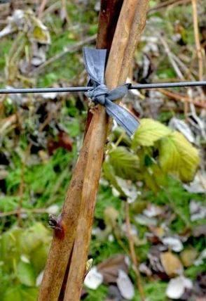 Обрезка малины осенью для начинающих в картинках и видео