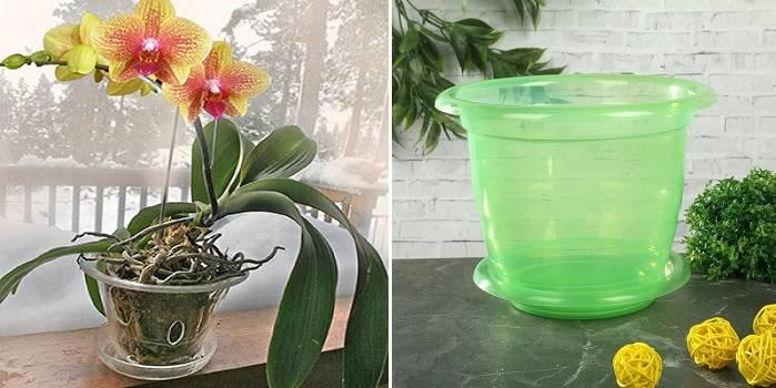 Когда можно пересадить орхидею в домашних условиях: подходящее время и правила пересадки