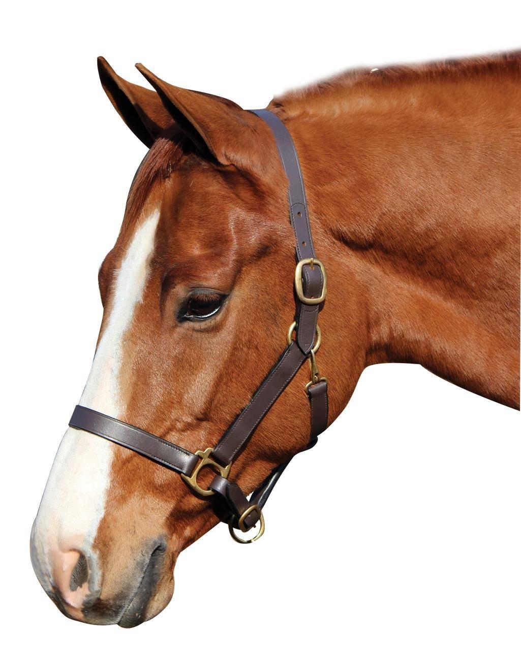 Недоуздок для лошадей: изготовление, меры предосторожности, фото