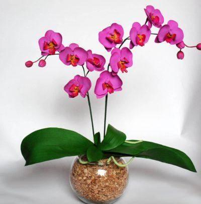 Как вырастить орхидею из отростка: советы и рекомендации специалистов