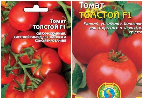 Томат толстой: урожайность, описание и характеристика сорта